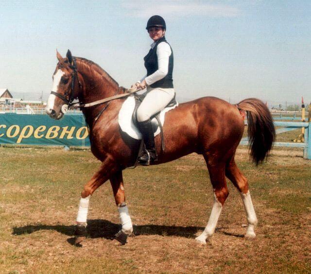 Будённовская верховая лошадь
