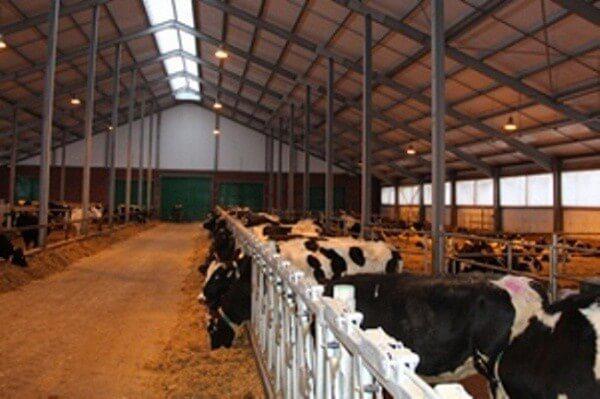 В калужской области введена в строй мега ферма