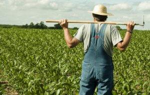 Перспективы фермерства