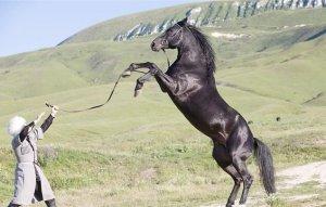Содержание кабардинской лошади
