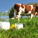 На семинаре в Ленинградской области рассматривали проблемы кормов для пород  КРС с высокой отдачей молока