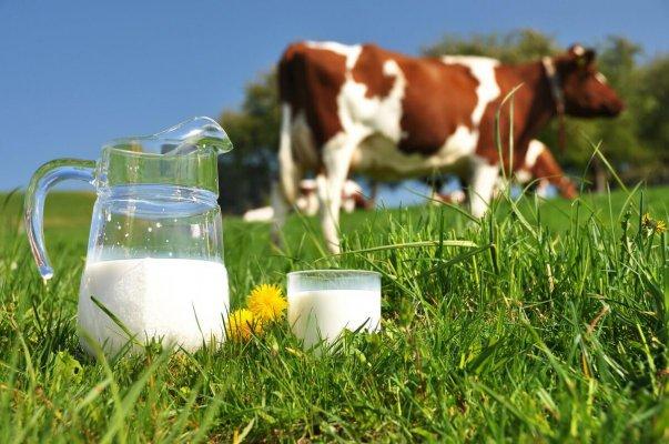 участие кормов в производсте молока
