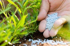 Назначение минеральных удобрений