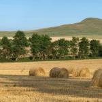 Государственная помощь начинающим фермерам