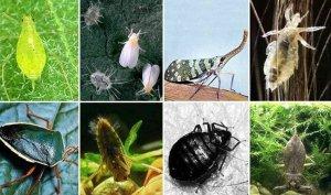 Боротьба с вредителями и болезнями растений без химии