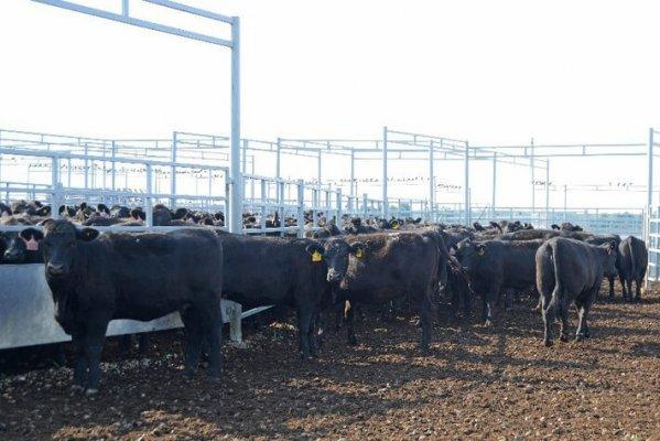 В Нижегородской области планируется с троительство крупногомясо-молочного центра