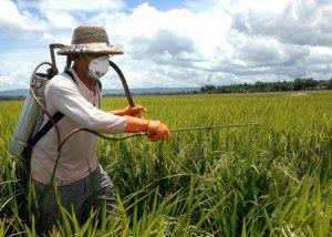 Пестициды и продукты их распада в сельском хозяйстве
