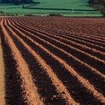 Сохранение почвы: основные причины деградации и методы рекультивации земель