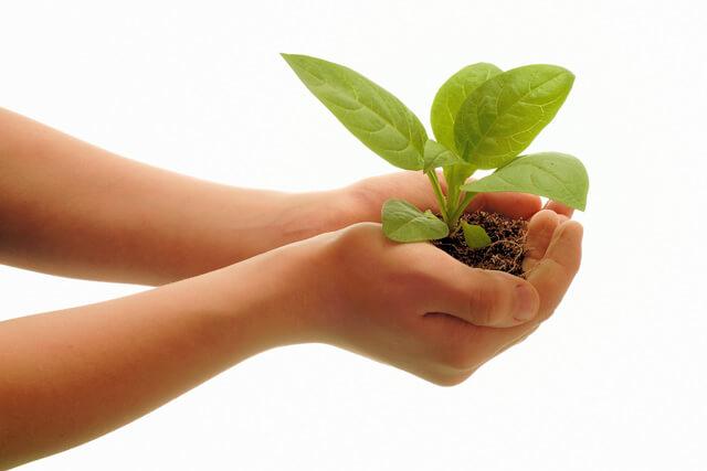 Органическое земледелие в сельском хозяйстве