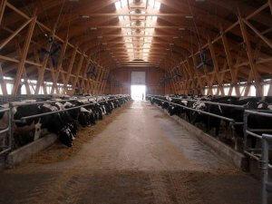 Стоки животноводческих комплексов