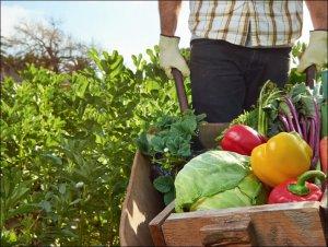 Овощи: сельскохозяйственная продукция