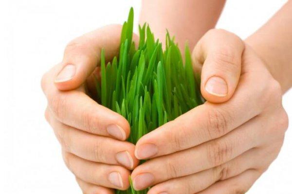Севастопольским аграриям рассказали об агростраховании