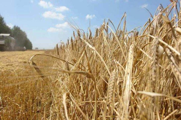 В Роствоской области начали борьбу с сорняками
