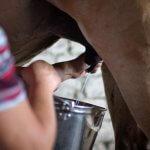 В Республике Башкирия прошло совещание, посвященное вопросу производства кумыса