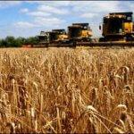 В Иркутской области через три года производство зерна вырастет до миллиона тонн