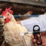 В правительстве Вологодской области разработан ряд мер по недопущению распространения вируса птичьего гриппа