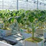 Уральские производители хризотил-асбеста предлагают инновационный материал для тепличных хозяйств и парников