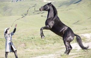 Карачаевская лошадь с наездником