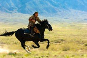 Лошадь казахской породы