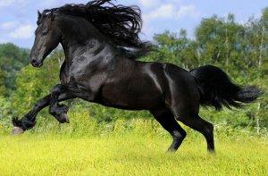 Выращивания табунных лошадей