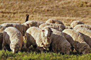 В Астрахани прошла 18 росийская выставка овцеводства и козоводства