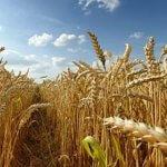 Ученые Тюменского Государственного университета изучают характеристики сои для ее выращивания на севере
