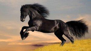Дикая лошадь мустанг
