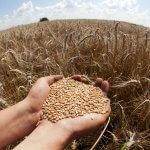Китай пока не рассчитывает на большие объемы российского зерна