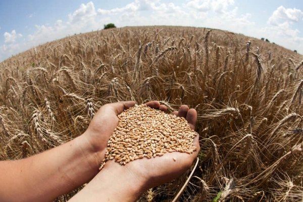 Россиское зерно в Китай большими объемами пока не будет поставляться
