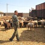 В Волгоградской области завершен конкурс начинающих фермеров на получение грантов