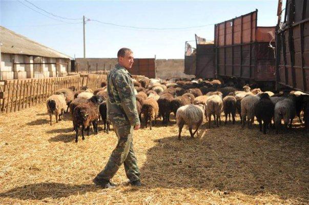 Власти Волгоградской области поддерживают начинающих фермеров