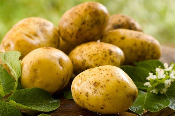На Ямале начали сажать картофель
