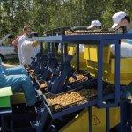 В Новосибирской области создается картофелеводческий центр с участием Китайской Народной Республики