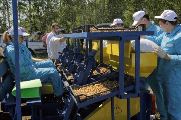 Под Новосибирском будетсоздан картофелеводческий центр