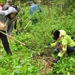 В Саратовской области активно восстанавливают лесные насаждения