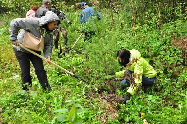 В Саратовской области восстанавливают леса