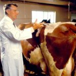 Ветеринары Амурской области начали объезд всех молочно-товарных ферм