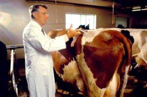 Ветеринары Амурской области начали профилактические объезды фермерских хозяйств