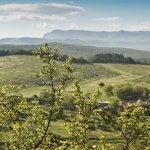 В Новосибирской области создается агроиндустриальный парк «Искитимский»