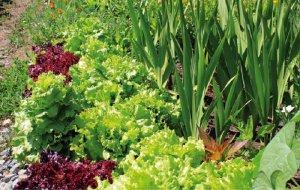 Выращивание растений на огороде