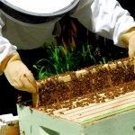 Пчеловоды Франции с дружеским визитом посетили своих коллег на Алтае