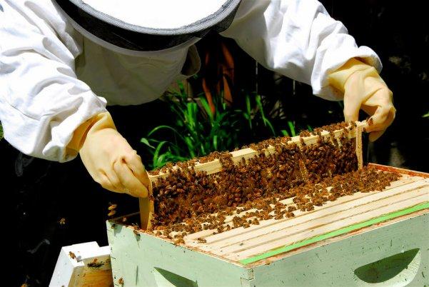 К алтайским пчеловодам приехали коллеги из Форанции
