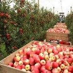Минсельхоз РФ формирует новую концепцию развития сельского хозяйства