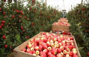 инсельхоз разрабатывает новую программу развития сельского хозяйства России