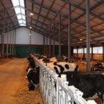 В Ростовском животноводческом хозяйстве коровы содержатся по европейским стандартам