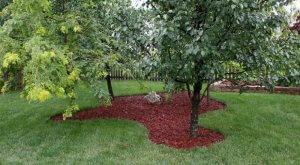 Мульчирование деревьев в саду