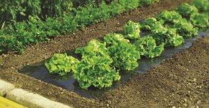 Мульчирование грядок в огороде