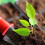 Конференция по организации органического сельхозпроизводства пройдет на ярмарке-выставке «Агрорусь»