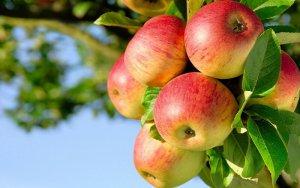 Плодоводство: основы и технологии выращивания
