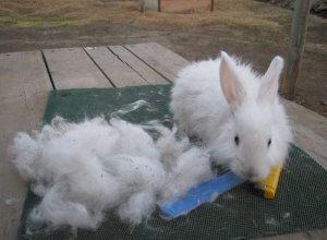 Пух белого пухового кролика